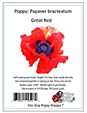 50 Poppy Seeds. Great Red Poppies. Papaver by One Stop Poppy Shoppe.