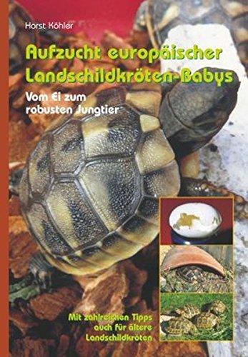 Aufzucht europäischer Landschildkröten-Babys: Vom Ei zum robusten Jungtier