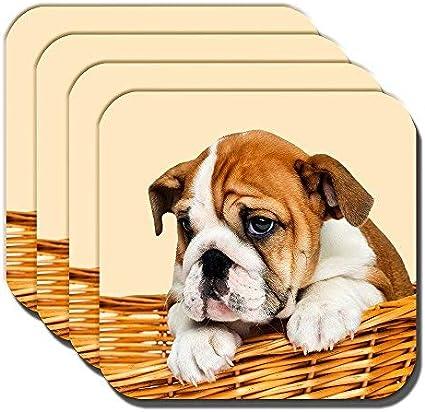 Cushions Corner Bulldog Inglés Cachorro Posavasos Marrón Blanco Cachorro Cesto Crema Acrílico - Juego de 4