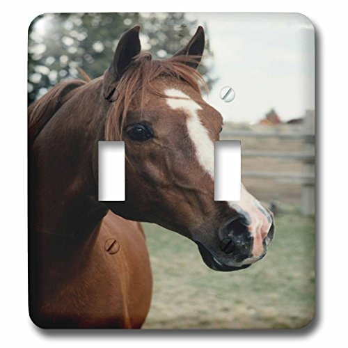3dRose TDSwhite – Horse Equine Photos - Arabian Horse Pasture - Light Switch Covers - double toggle switch (lsp_285452_2) by 3dRose