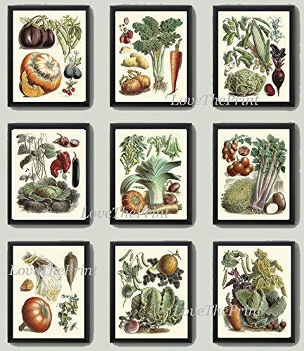 (Vegetable Print Set of 9 Art Prints Antique Beautiful Eggplant Pumpkin Cabbage Brussels Sprout Tomato Onion Carrot Green Vegeterian Garden Nature Home Room Decor Wall Art Unframed LPP )