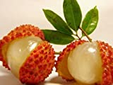 New Arrival! Fresh Lychee Lychy Litchi Seeds, Leechee Fruit Tree Seeds, 5pcs/bag Litchi seeds