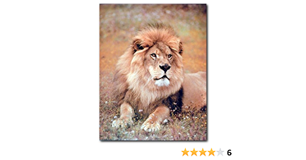 AFRICAN LION Picture Poster Print Art A0 A1 A2 A3 A4 Animal Poster 3413