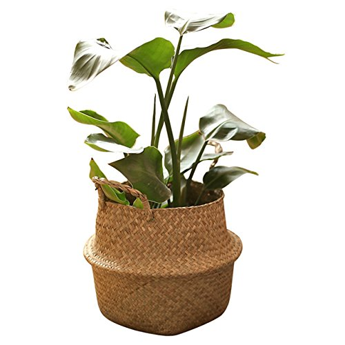 """RISEON Natural Seagrass Belly Basket Panier Storage Plant Pot Collapsible Nursery Laundry Tote Bag with Handles (11"""" (27x24cm))"""