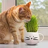 100% Organic cat grass kit/pet grass kit with cat grass planter. Natural hairball control and hairball remedy for cats. Natural digestive aid. Includes planter, Organic seed mix and organic soil.