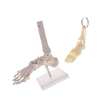 D dolity llavero esqueleto pie y tobillo regalo decorativo + ...