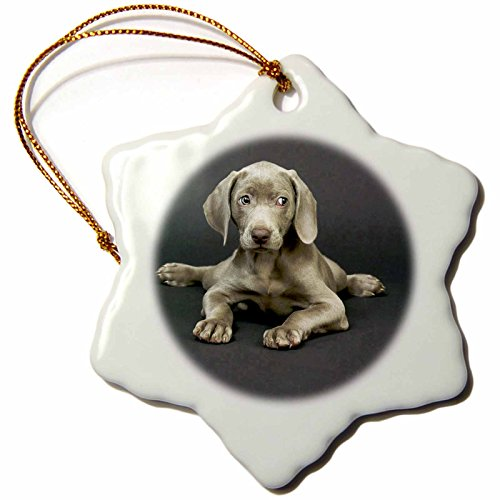 3dRose Weimaraner Puppy Snowflake Porcelain Ornament, 3-Inch