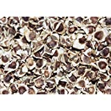 PlenTree 100 Fresh Seeds Moringa Oleifera Miracle Tree Horseradish