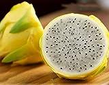 ویکالا · خرید  اصل اورجینال · خرید از آمازون · Dwqgroup Rare Large Yellow Dragon Fruit Pitaya Organic Seeds, Professional Pack, 30 Seeds / Pack, Sweet Selenicereus Megalanthus wekala · ویکالا