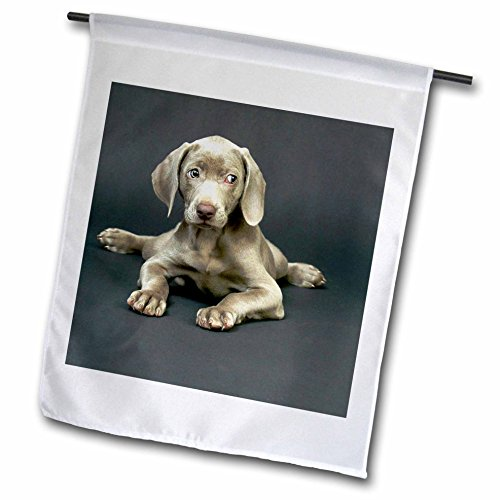 maraner Puppy, Garden Flag, 12 by 18-Inch ()