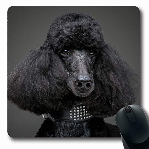 (Ahawoso Mousepads Curly Adult Black Poodle On Grey Adorable Attentive Big Breed Canine Collar Lovely Oblong Shape 7.9 x 9.5 Inches Non-Slip Gaming Mouse Pad Rubber Oblong Mat)