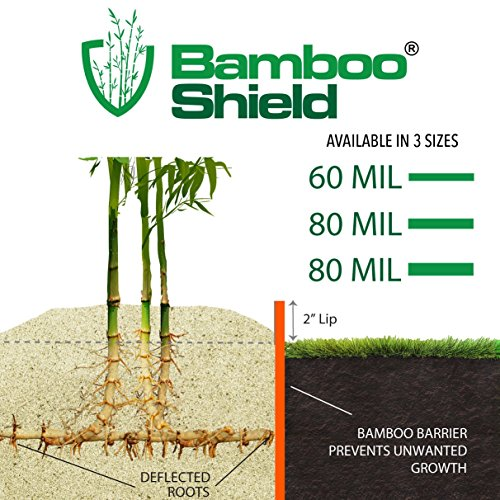 Bamboo Shield – 50 Foot Long X 30 Inch Wide 80mil Bamboo Root Barrier/Water Barrier by Bamboo Shield (Image #1)