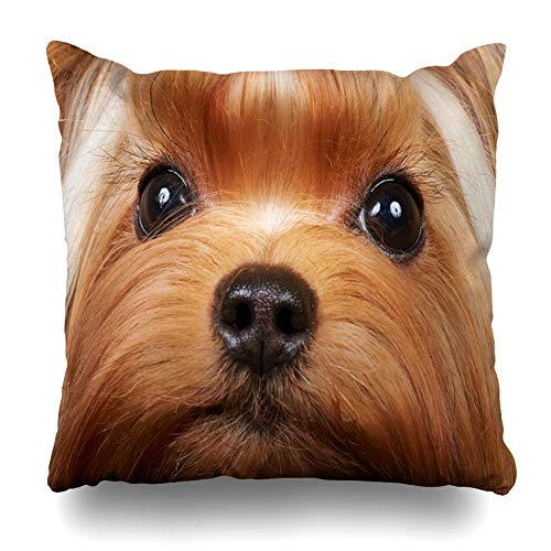 Ahawoso Throw Pillow Cover Charm Brown Dog Yorkshire Terrier Eye Long Eyelashes Show Yorkie Design Home Decor Pillow Case Square Size 18x18 Inches Zippered Pillowcase ()