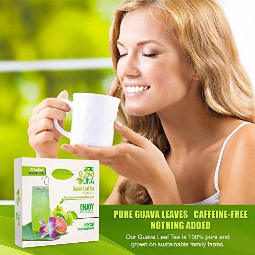 Guava-Leaf-Tea-120-Individually-Wrapped-Teabags