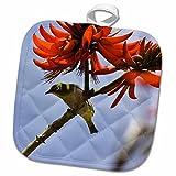 3dRose Danita Delimont - Birds - Japanese White-eye bird, Hawaii - US12 RBE0003 - Ralph H. Bendjebar - 8x8 Potholder (phl_89857_1)