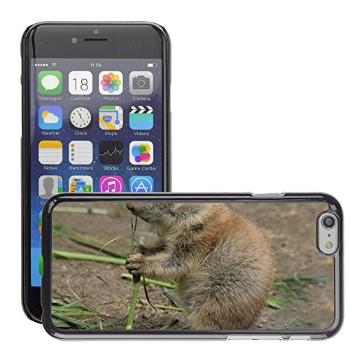 """Bild Hart Handy Schwarz Schutz Case Cover Schale Etui // M00134772 Präriehund Cynomys Tiere Gophers // Apple iPhone 6 PLUS 5.5"""""""
