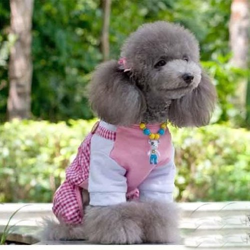 Cute Dog's Plaid Double Leg Pants Red Rose Colored Shirt 100% cotton-Size Small by Step