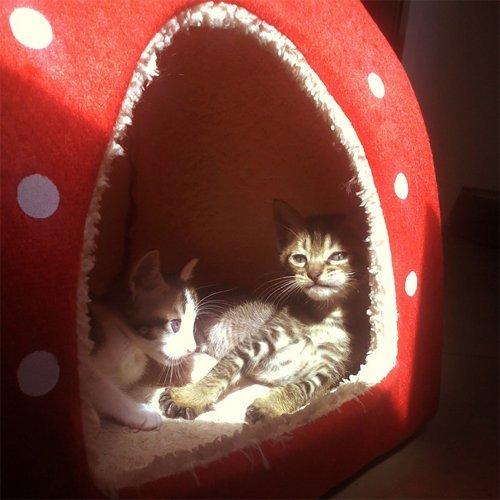 KINGMAS-Cute-Soft-Sponge-Strawberry-Pet-Cat-Dog-House-Bed-Warm-Cushion-Basket-SizeS-by-akezone