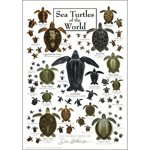 - Earth Sky & Water Poster - Sea Turtles of the World