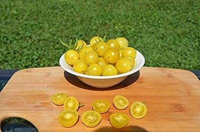 Lemon Drop Organic Tomato Seeds- Rare Yellow Cherry Heirloom- 50+ Seeds by Ohio Heirloom Seeds