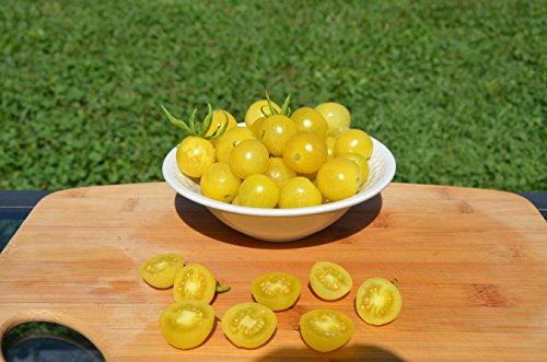 Lemon Drop Organic Tomato Seeds- Rare Yellow Cherry Heirloom- 50+ Seeds by Ohio Heirloom Seeds