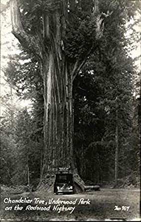 Chandelier Tree, Underwood Park on the Redwood Highway Trees ...