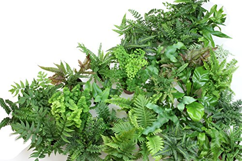 "Fern Variety Pack (4 Plants) (4"" Pots)"