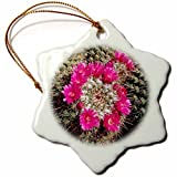 Ornaments to Paint Danita Delimont - Cactus - Mammillaria standleyi, Stanleys Pincushion Cactus -
