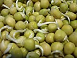 buy Todd's Seeds Sweet Green Pea Sprouting Seed By the Pound now, new 2018-2017 bestseller, review and Photo, best price $10.49