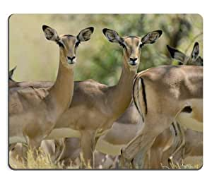 Antelope Group Grassland Pack Wildlife Africa Animal Mouse Pads Customized Made to Order Support Ready 9 7/8 Inch (250mm) X 7 7/8 Inch (200mm) X 1/16 Inch (2mm) High Quality Eco Friendly Cloth with Neoprene Rubber Luxlady Mouse Pad Desktop Mousepad Laptop Mousepads Comfortable Computer Mouse Mat Cute Gaming Mouse pad