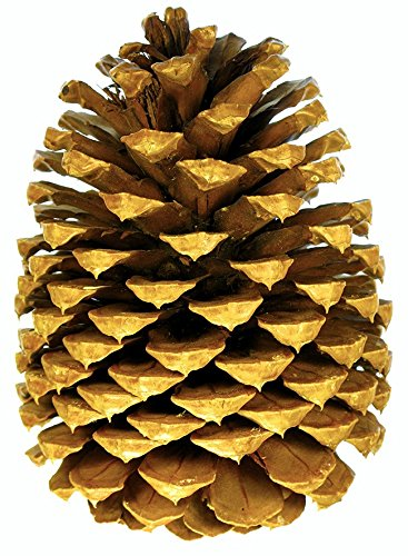 Extra Large Premium Table Top Pine Cones Set of 3