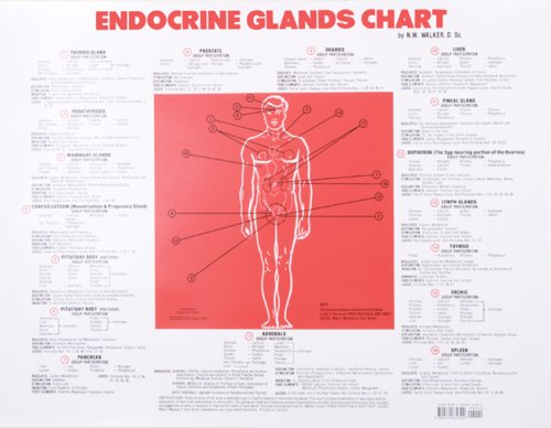 Endocrine Glands Chart - Body Walker