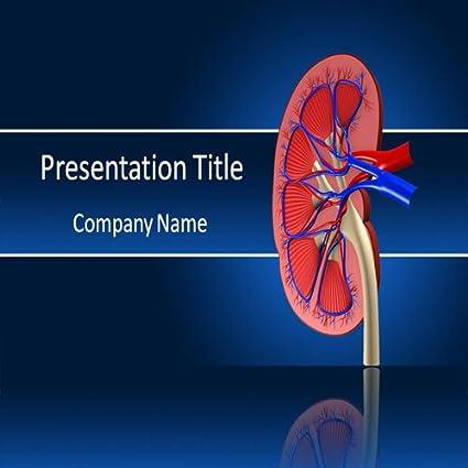 Amazon kidney powerpoint template powerpoint templates on kidney powerpoint template powerpoint templates on human kidney toneelgroepblik Choice Image