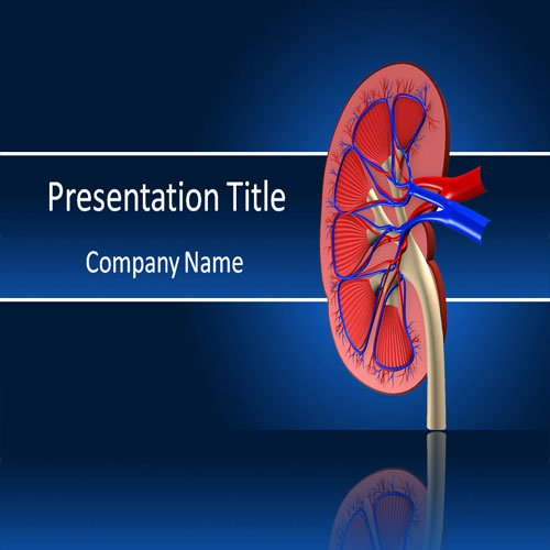 Amazon kidney powerpoint template powerpoint templates on kidney powerpoint template powerpoint templates on human kidney toneelgroepblik