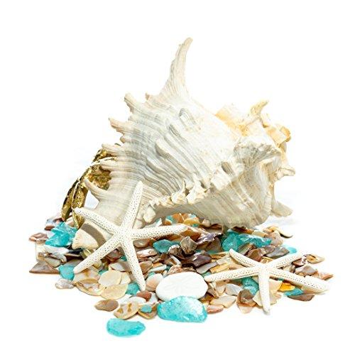 Nautical Crush Trading Gold Crab Figurine w/Nautical Mix | Golden Hermit Crab w/Shell Statue TM …