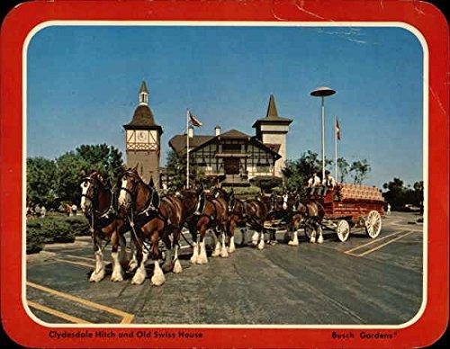clydesdale-hitch-and-old-swiss-house-busch-gardens-busch-gardens-florida-original-vintage-postcard