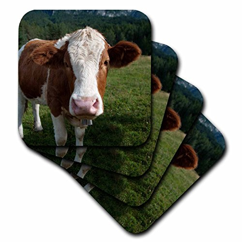 3dRose cst_165721_2 Simmental Cow Soft Coasters, (Set of (Cow Coaster)