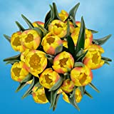 GlobalRose 30 Stems of Yellow Tulips Flowers - Fresh Flowers for Delivery