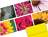 Note Card Cafe All Occasion Greeting Card Set with