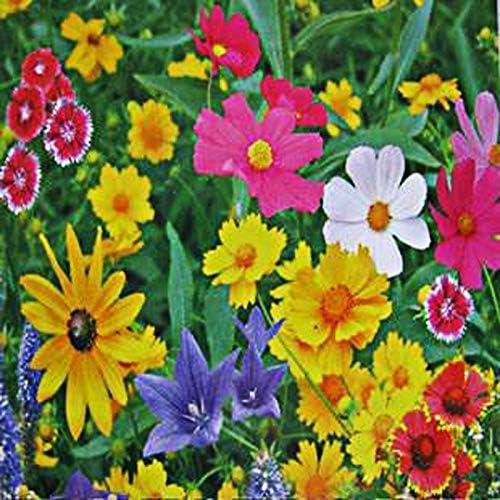 Mezcla de flores silvestres Semillas 60+ Plantación de pájaros y mariposas en el jardín de su casa Bonsai Yards para decorativa 100% pura semilla viva: Amazon.es: Jardín