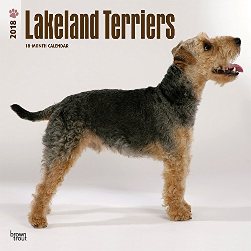 Lakeland Terriers 2018 12 x 12 Inch Monthly Square Wall Calendar, Animals Dog Breeds Terriers
