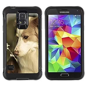 ZETECH CASES / Samsung Galaxy S5 SM-G900 / BORDER COLLIE CORGI PET SUMMER DOG NATURE / frontera collie corgi animal doméstico verano perro naturaleza / Robusto Caso Carcaso Billetera Shell Ar
