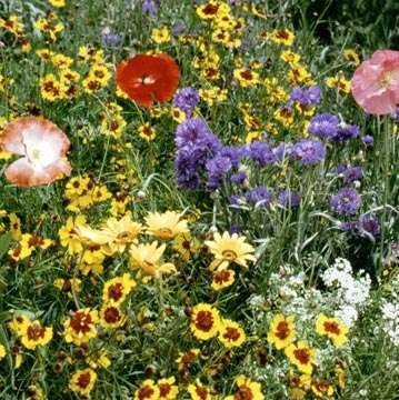 Outsidepride Dryland Wildflower Seed Mix - 5 LB