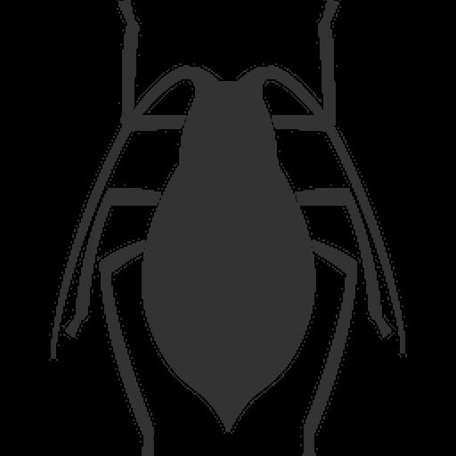 Stink Bugs (Stink Eggs Bug)