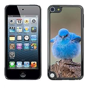 Caucho caso de Shell duro de la cubierta de accesorios de protección BY RAYDREAMMM - Apple iPod Touch 5 - Chick Cute Bird Tropical Spring