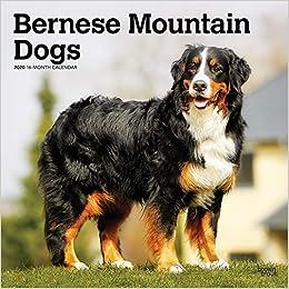 Télécharger Bernese Mountain Dogs 2020 Calendar livres PDF gratuits