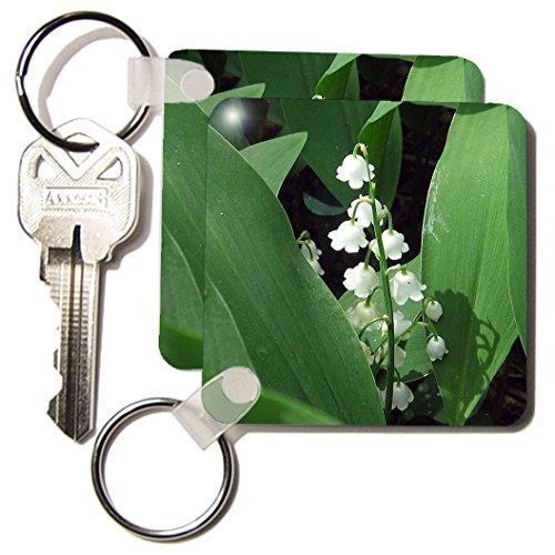 Lily Key - 3