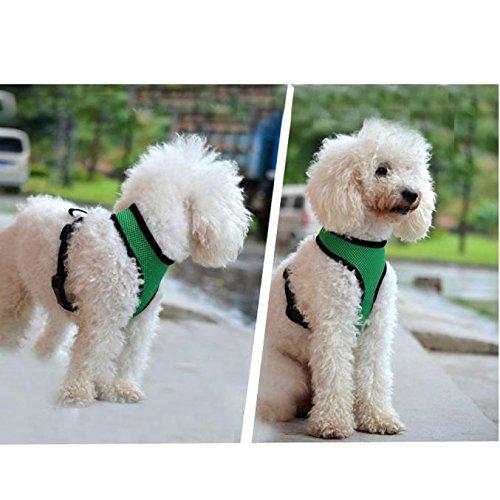 Farjing - Arnés de Malla Suave para Perro, Correa para el Pecho: Amazon.es: Productos para mascotas