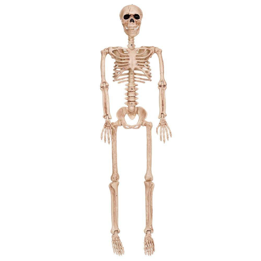 Crazy Bonez Posable Skeleton Decoration, 36'' by Crazy Bonez