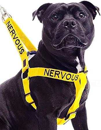 Arnés para perro L-XL que no tira, código de color amarillo, con ...